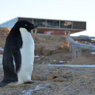 National Centre for Antartic and Ocean Research (NACOR) Forschungsstation - Indische Antarktisstation Larsemann Hills